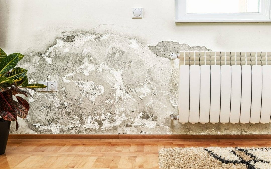 Can Mold Return After Mold Remediation?
